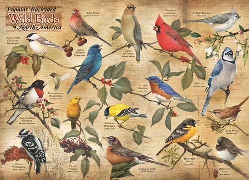 Cobble Hill puzzle 1000 Teile - Popular Backyard Wild Birds